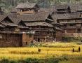 Reisernte in Sanjiang